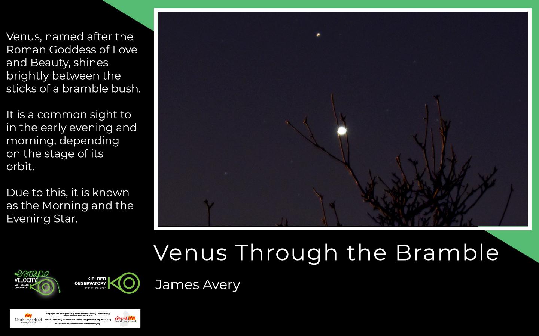 James Avery, Venus Through the Bramble